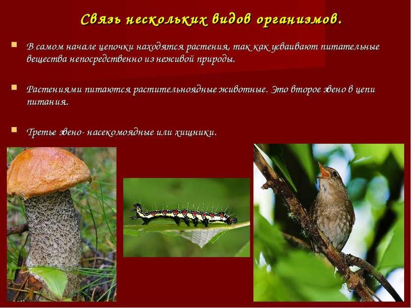 Связь нескольких видов организмов. В самом начале цепочки находятся растения,...