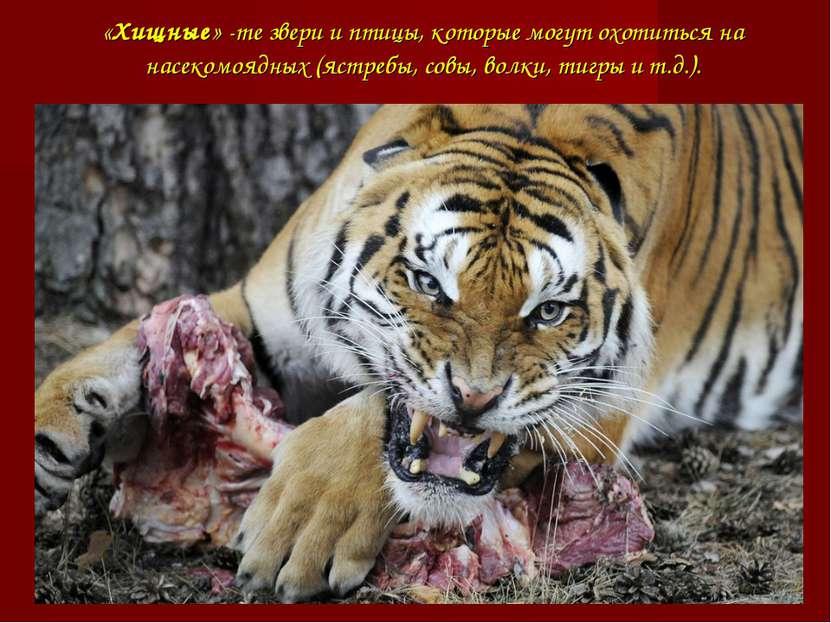 «Хищные» -те звери и птицы, которые могут охотиться на насекомоядных (ястребы...