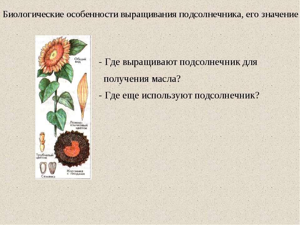 Биологические особенности выращивания подсолнечника, его значение - Где выращ...