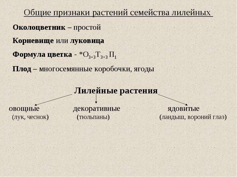 Общие признаки растений семейства лилейных Околоцветник – простой Корневище и...