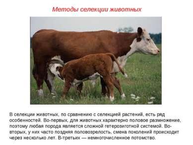 В селекции животных, по сравнению с селекцией растений, есть ряд особенностей...