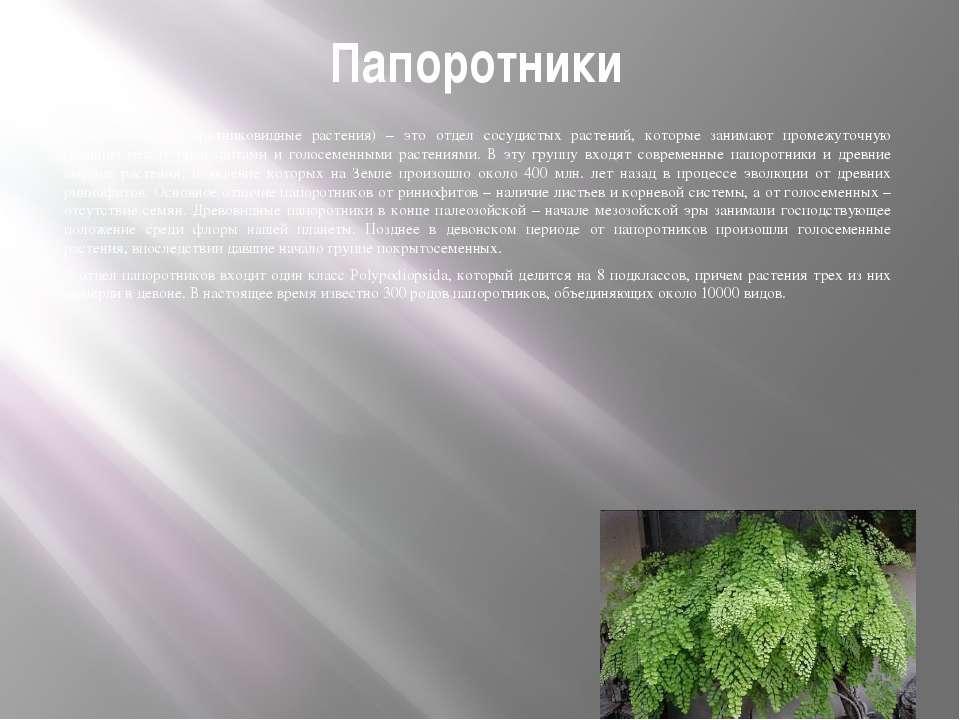 Папоротники Папоротники (папоротниковидные растения) – это отдел сосудистых р...