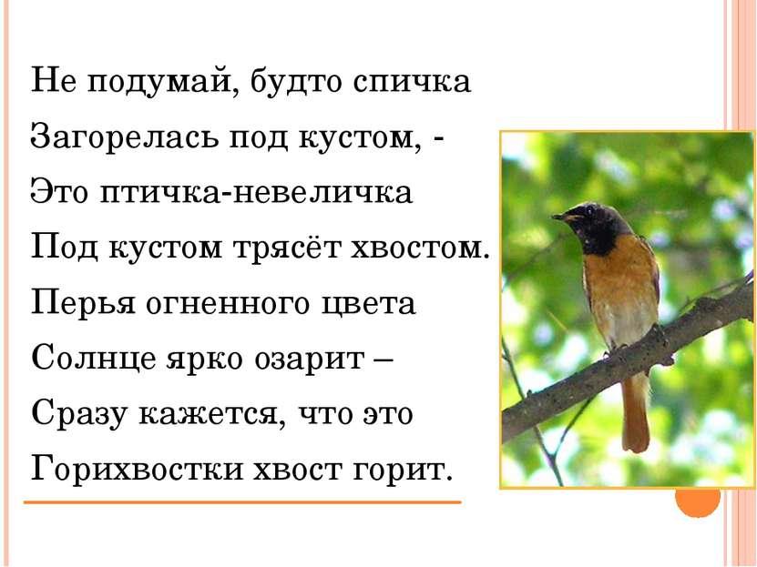 Не подумай, будто спичка Загорелась под кустом, - Это птичка-невеличка Под ку...