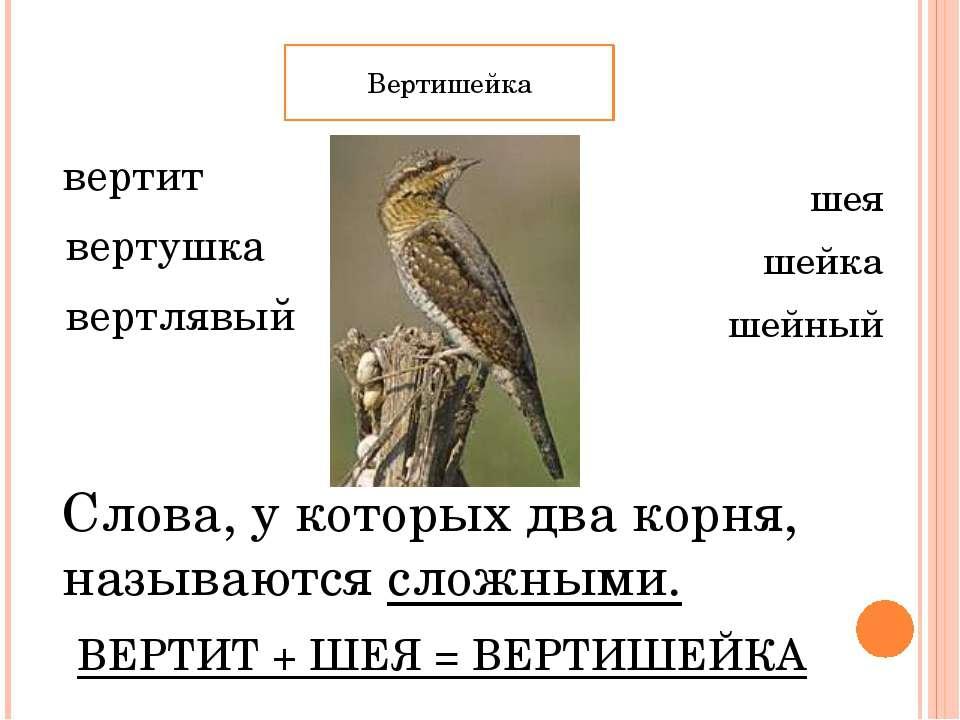 вертит вертушка вертлявый шея шейка шейный Слова, у которых два корня, называ...