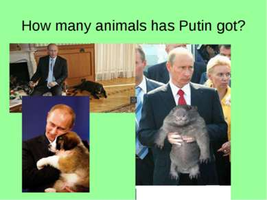 How many animals has Putin got?