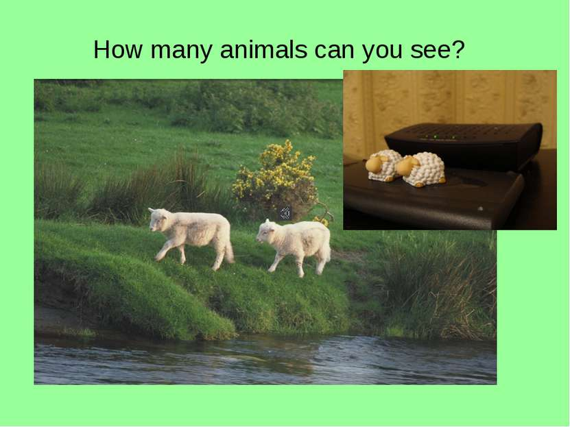 How many animals can you see?