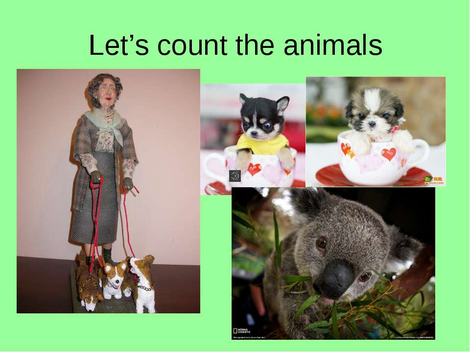 Let's count the animals