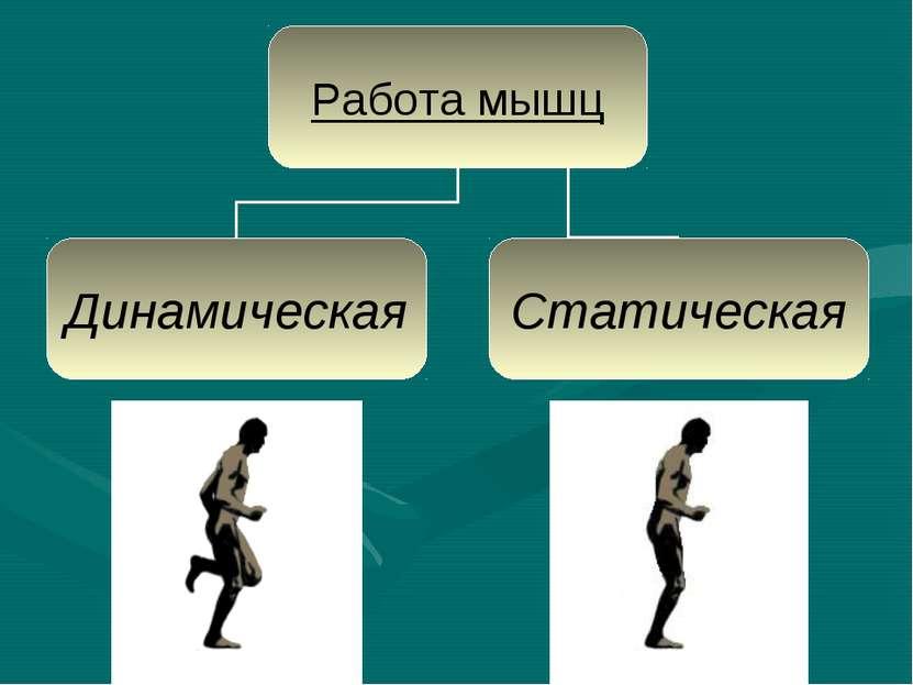 Презентация работ мышц