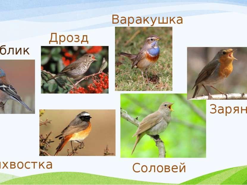 Зяблик Дрозд Зарянка Соловей Горихвостка Варакушка