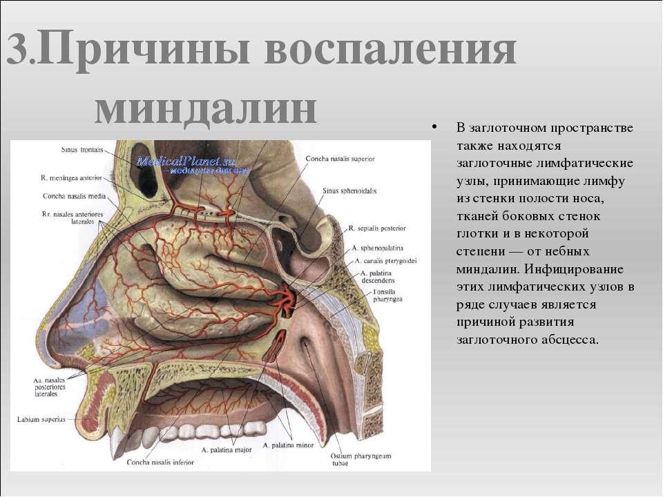 В заглоточном пространстве также находятся заглоточные лимфатические узлы, пр...