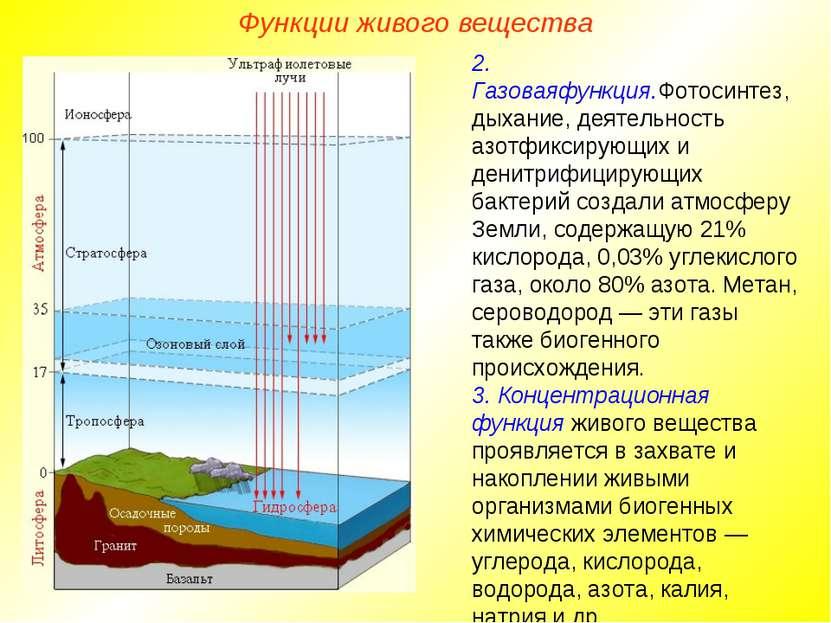 Функции живого вещества 2. Газоваяфункция.Фотосинтез, дыхание, деятельность а...