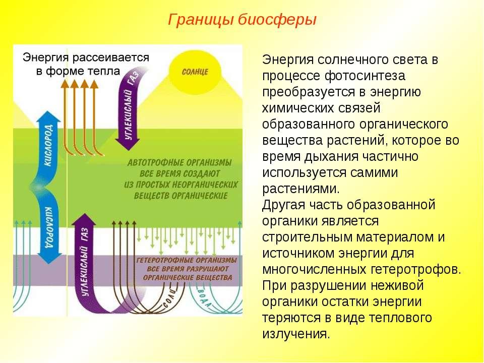 Границы биосферы Энергия солнечного света в процессе фотосинтеза преобразуетс...