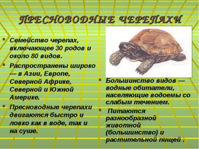 ПРЕСНОВОДНЫЕ ЧЕРЕПАХИ Семейство черепах, включающее 30 родов и около 80 видов...