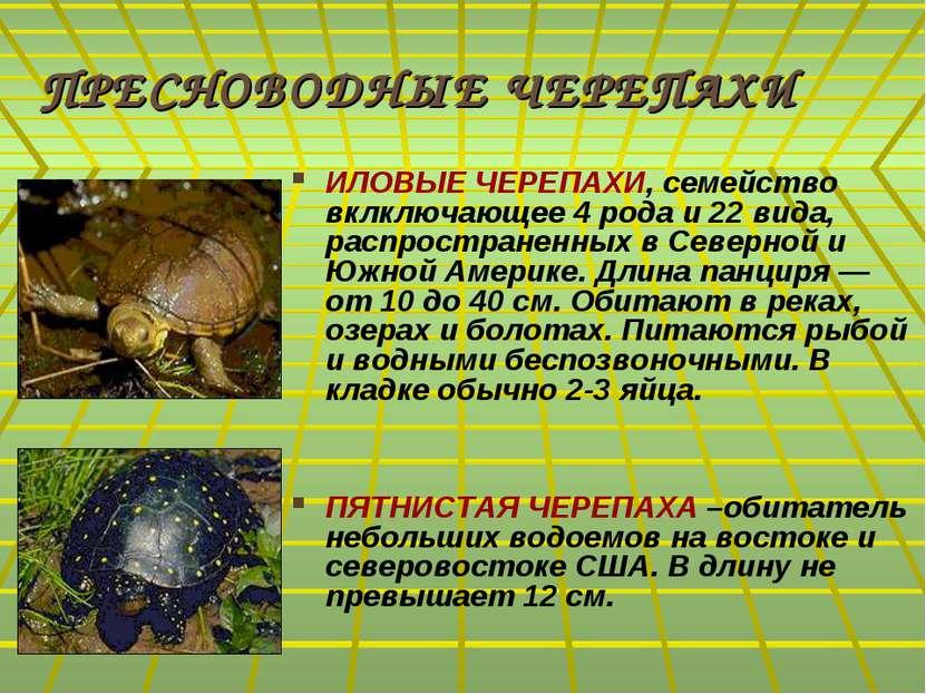 ПРЕСНОВОДНЫЕ ЧЕРЕПАХИ ИЛОВЫЕ ЧЕРЕПАХИ, семейство вклключающее 4 рода и 22 вид...