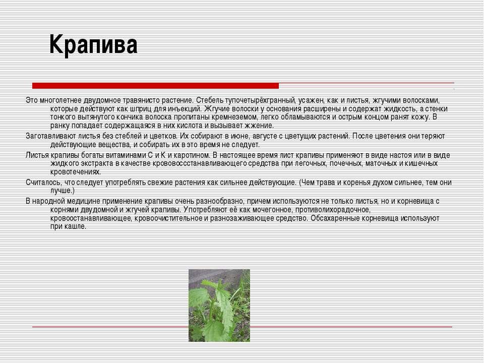 Крапива Это многолетнее двудомное травянисто растение. Стебель тупочетырёхгра...