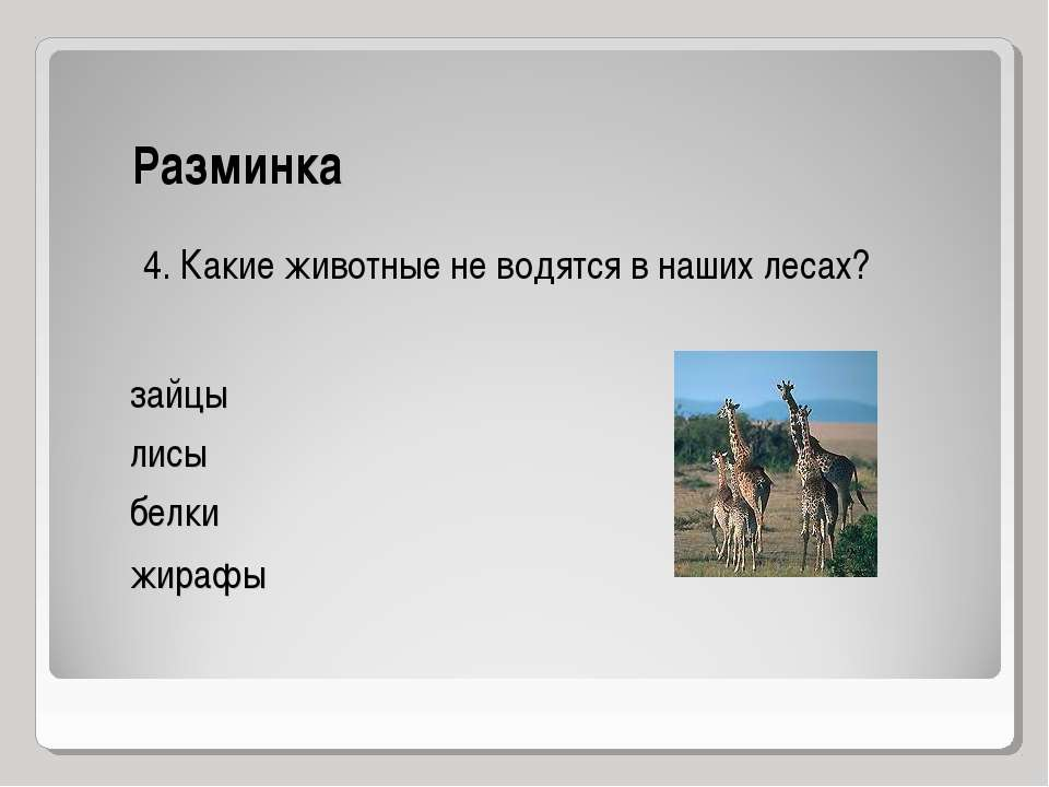 Разминка 4. Какие животные не водятся в наших лесах? зайцы лисы белки жирафы