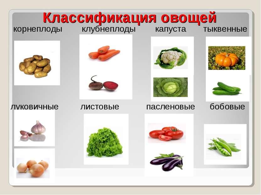 Классификация овощей корнеплоды клубнеплоды капуста тыквенные луковичные лист...