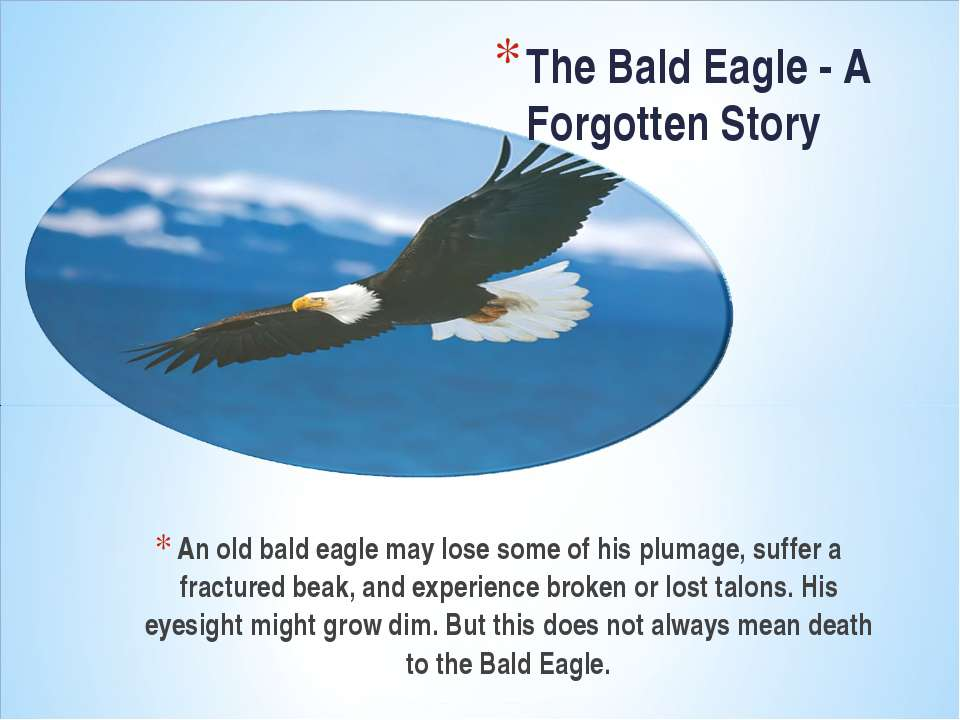An old bald eagle may lose some of his plumage, suffer a fractured beak, and ...