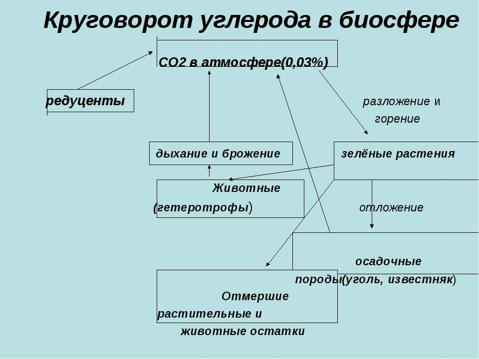 Круговорот углерода в биосфере СО2 в атмосфере(0,03%) редуценты разложение и ...