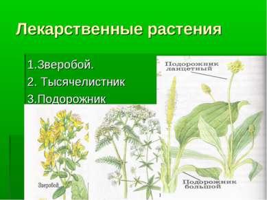 Лекарственные растения 1.Зверобой. 2. Тысячелистник 3.Подорожник