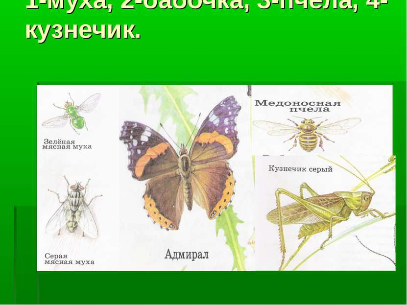 1-муха, 2-бабочка, 3-пчела, 4-кузнечик.