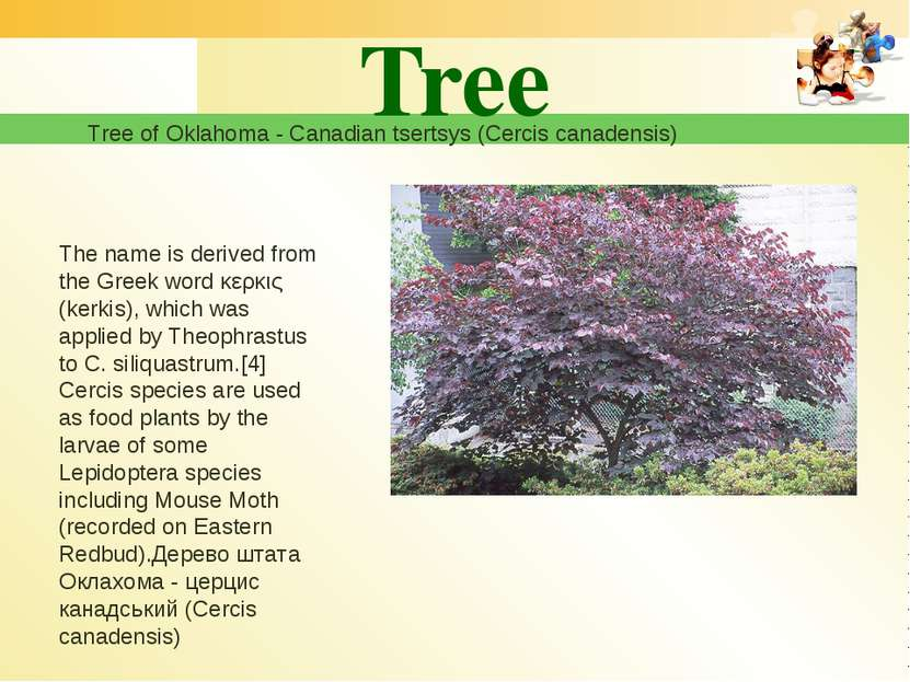 Tree Tree of Oklahoma - Canadian tsertsys (Cercis canadensis) The name is der...