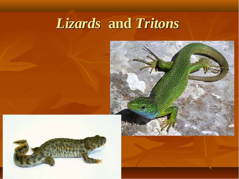 Lizards and Tritons