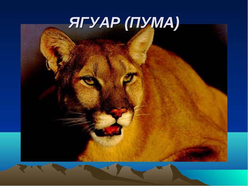 ЯГУАР (ПУМА)
