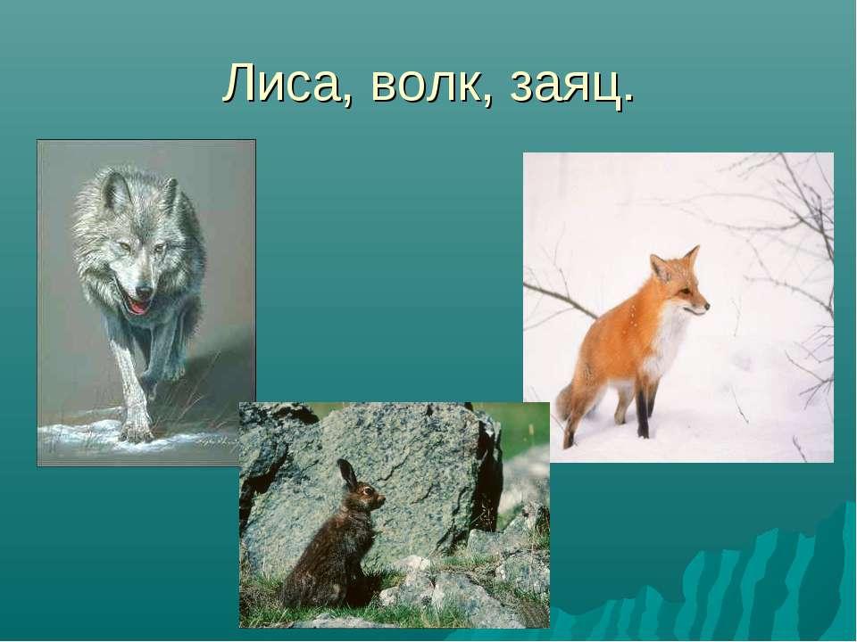 Лиса, волк, заяц.