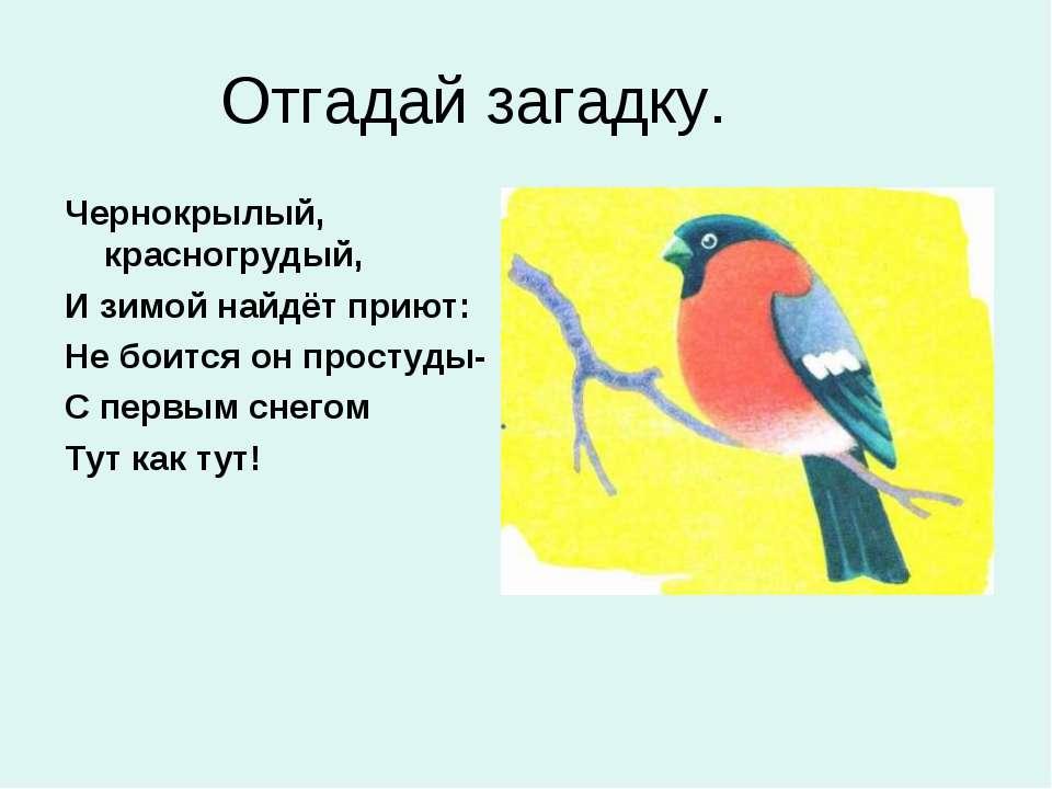 Отгадай загадку. Чернокрылый, красногрудый, И зимой найдёт приют: Не боится о...