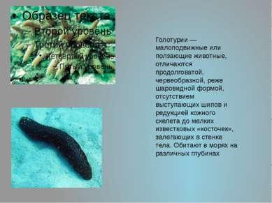 Голотурии— малоподвижные или ползающие животные, отличаются продолговатой, ч...