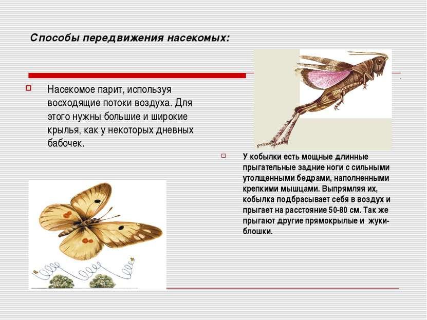 Способы передвижения насекомых: Насекомое парит, используя восходящие потоки ...