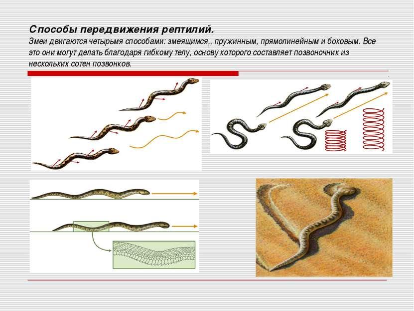 Способы передвижения рептилий. Змеи двигаются четырьмя способами: змеящимся,,...