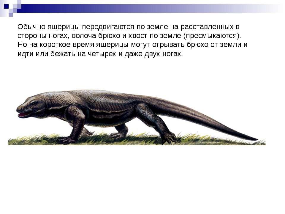 Обычно ящерицы передвигаются по земле на расставленных в стороны ногах, волоч...