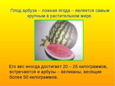 Его вес иногда достигает 20 – 25 килограммов, встречаются и арбузы – великаны...
