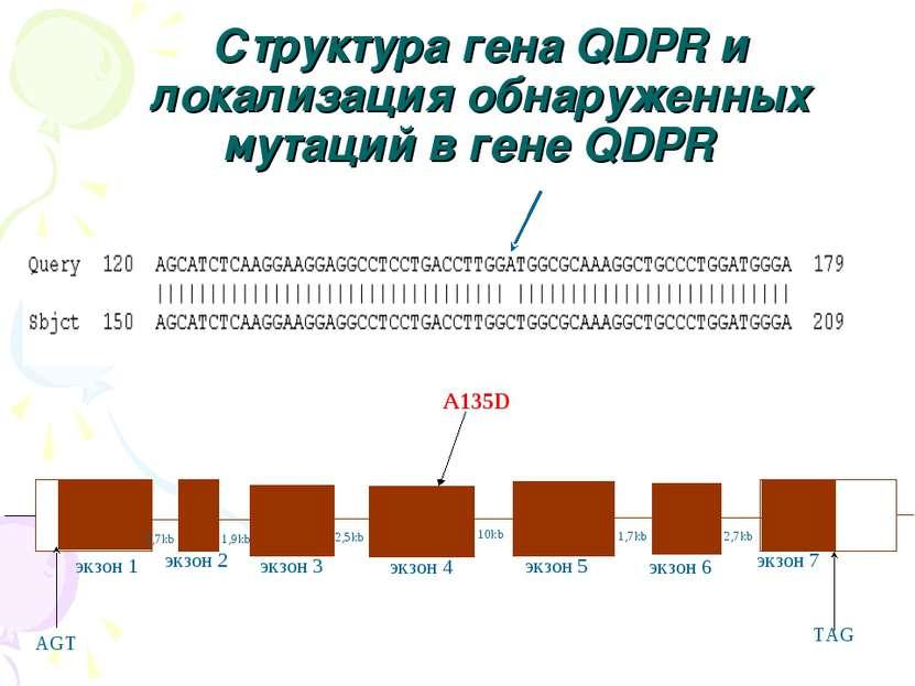AGT TAG 2,7kb 1,9kb 10kb 2,5kb 1,7kb экзон 1 экзон 2 экзон 3 экзон 4 экзон 5 ...
