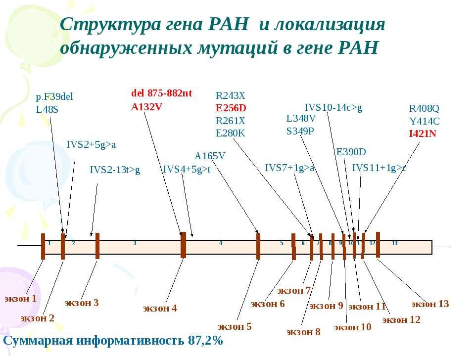 Структура гена PAH и локализация обнаруженных мутаций в гене PAH Суммарная ин...