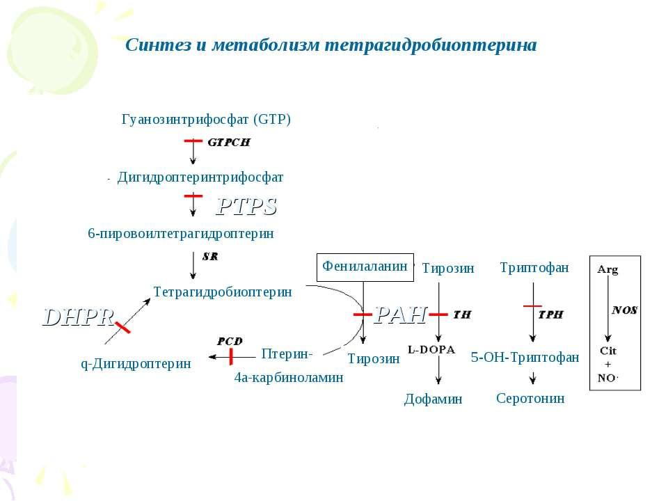 Синтез и метаболизм тетрагидробиоптерина