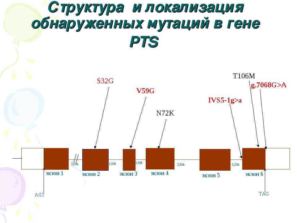 Структура и локализация обнаруженных мутаций в гене PTS 2,0kb 1,5kb 0,4kb 2,5...