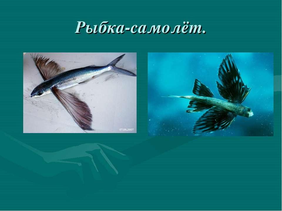 Рыбка-самолёт.