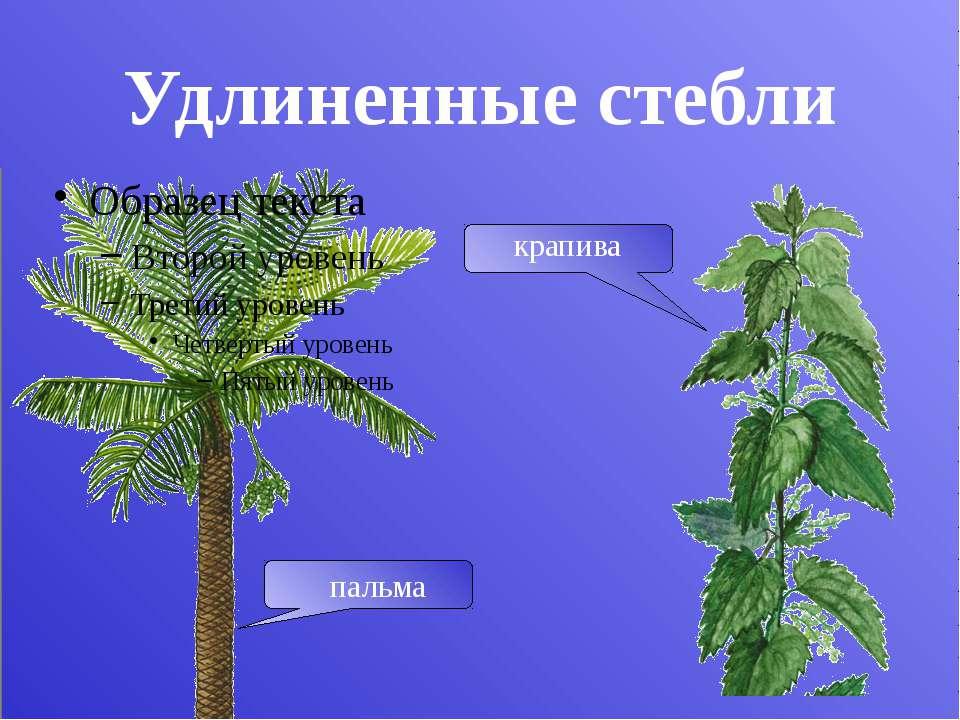 Функции стебля Проводящая Опорная Запасающая Стебель нужен растению прежде вс...