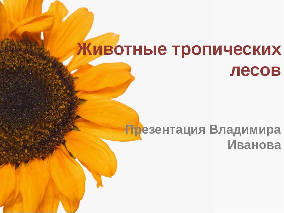 Животные тропических лесов Презентация Владимира Иванова