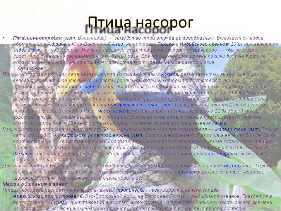 Пти цы-носоро ги (лат.Bucerotidae)— семейство птиц отряда ракшеобразных. Вк...
