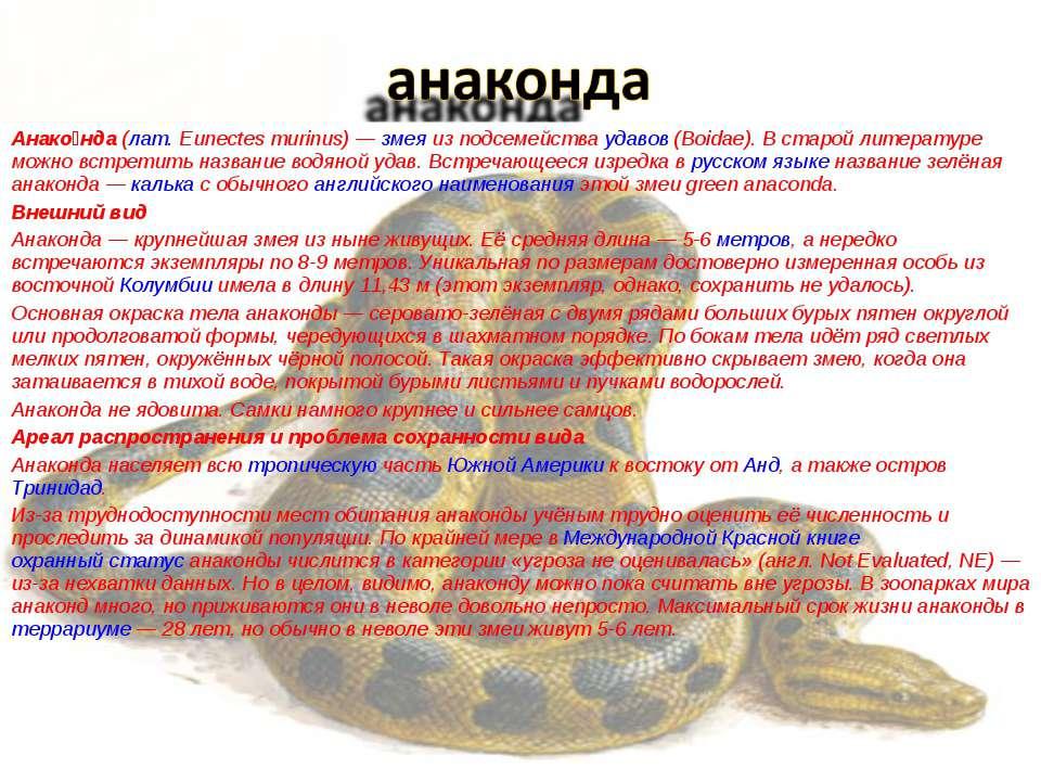 Анако нда (лат.Eunectes murinus)— змея из подсемейства удавов (Boidae). В с...