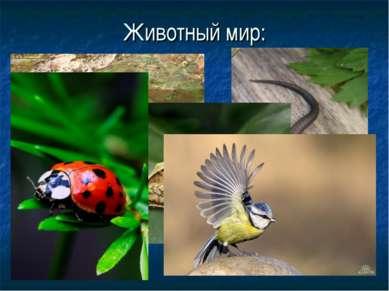 Животный мир: