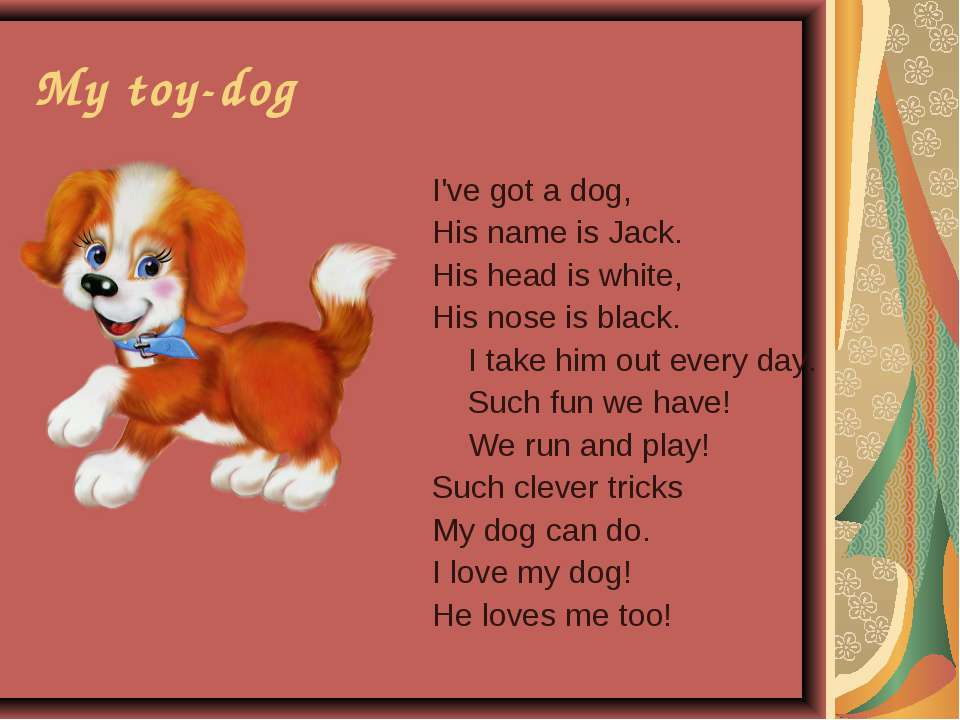 My toy-dog I've got a dog, His name is Jack. His head is white, His nose is b...