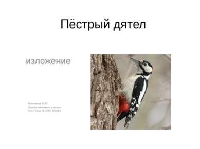 Пёстрый дятел изложение Максимова Ю.Ю. Учитель начальных классов ГБОУ СОШ № 2...