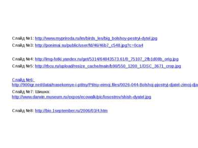 Слайд №1: http://www.mypriroda.ru/im/birds_les/big_bolshoy-pestryi-dytel.jpg ...