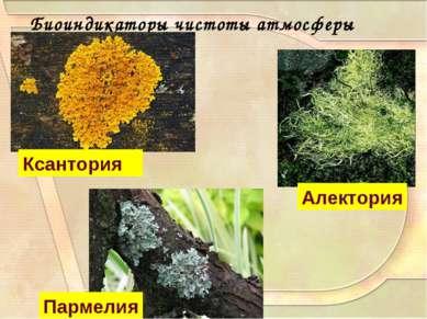 Биоиндикаторы чистоты атмосферы Пармелия Алектория Ксантория