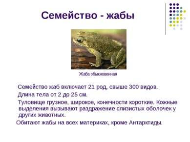 Семейство - жабы Семейство жаб включает 21 род, свыше 300 видов. Длина тела о...